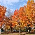 Autumn Leaves by Athena Mckinzie