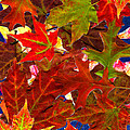 Autumn Leaves Collage by Nancy Mueller