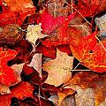 Autumn Leaves by Dave Sandt