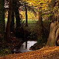 Autumn Leaves by Dawn OConnor