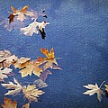 Autumn Leaves Drifting by Ginger Denning
