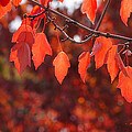 Autumn Leaves In Medford by Mick Anderson