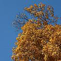 Autumn Leaves In Tn by Leann DeBord
