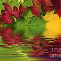 Autumn Leaves In Water With Reflection by Simon Bratt Photography LRPS