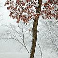 Autumn Leaves In Winter Snow Storm by John Stephens