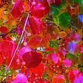 Autumn Leaves by Judi Bagwell
