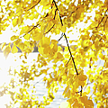 Autumn Leaves On Branch With Lake In Background, Close-up by Johner Images