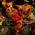 Autumn Leaves On The Moss by David Patterson