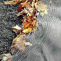 Autumn Leaves Tiny Dam by Mike Nellums