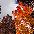 Autumn Looking Up by Mick Anderson