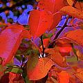 Autumn Magic 1 by First Star Art