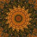 Autumn Mandala 1 by Rhonda Barrett