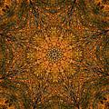 Autumn Mandala 2 by Rhonda Barrett