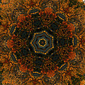 Autumn Mandala 5 by Rhonda Barrett
