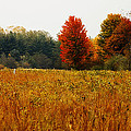 Autumn Meadow by Scott Hovind