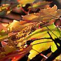Autumn Morning by David Troxel