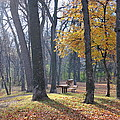 Autumn Morning Munson Park  by Carla Bendixen