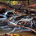 Autumn Moving Water With Foliage by Jiayin Ma