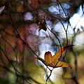 Autumn Mystere by Mike Reid