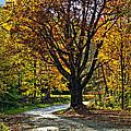 Autumn Oak by Steve Harrington