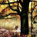 Autumn Oak Tree by Dariusz Gudowicz