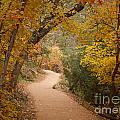 Autumn On Emerald Trail by Idaho Scenic Images Linda Lantzy