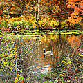 Autumn On Long Island by Mikki Cucuzzo