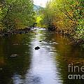 Autumn On Satus Creek  by Jeff Swan