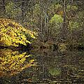 Autumn On The Pond by Rob Travis