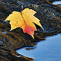Autumn On The Tellico River - D004558 by Daniel Dempster