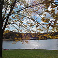 Autumn Overlooking The Dam by Loretta Pokorny