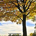 Autumn Park by Elena Elisseeva