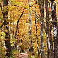 Autumn Path 2 by Kim Hymes