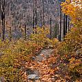 Autumn Path by Mike Reid