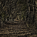 Autumn Path by Thomas Young