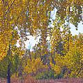Autumn Picnic Spot by James BO  Insogna