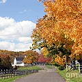 Autumn Picture Postcard by Living Color Photography Lorraine Lynch