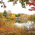 Autumn Pond by Mike Nellums