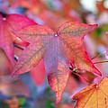 Autumn Rainbow by Barbara Domanska