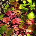 Autumn Rainbow  by Saija  Lehtonen