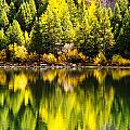Autumn Reflection In Georgetown Lake Colorado by Beth Riser