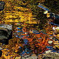 Autumn Reflections by Cheryl Baxter