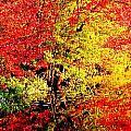 Autumn Reflections by Kara Ray
