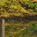 Autumn Reflections_0138 by Michael Peychich