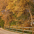 Autumn  Road To The Ranch by James BO  Insogna