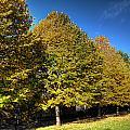 Autumn Row by Steve Purnell