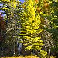 Autumn Scene Of Colorful Trees On The Little Manistee River In Michigan No. 0855 by Randall Nyhof