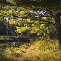 Autumn Scene Of The Little Manistee River In Michigan No. 0882 by Randall Nyhof