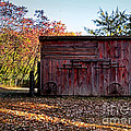 Autumn Shed by Sue Stefanowicz