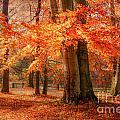 autumn skirt I by Hannes Cmarits